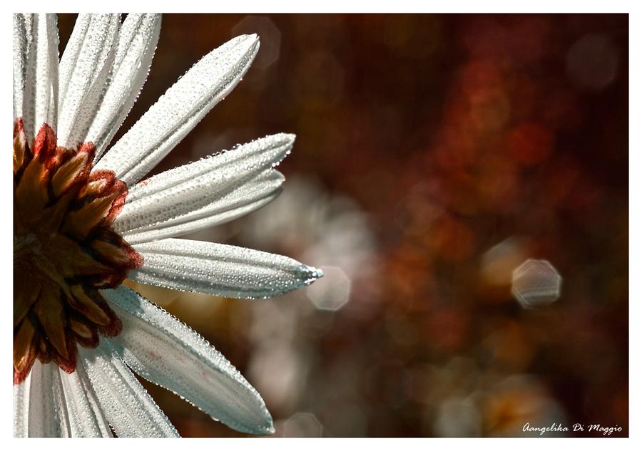 Blüte im Herbst