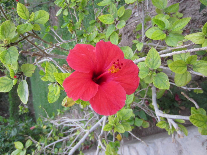 Blüte im Hotelgarten in Ägypten