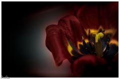 Blüte im Kelch