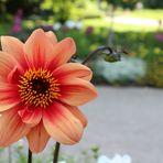 Blüte im Sommer