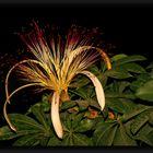 Blüte im Tropical Islands..zur später Stunde..