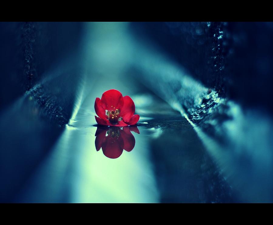 Blüte in der Gosse