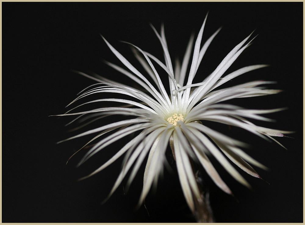 Blüte in der Nacht