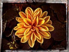 Blüte in Gelb (2)