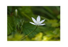 Blüte in Weiß