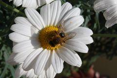 Blüte mit Bienchen
