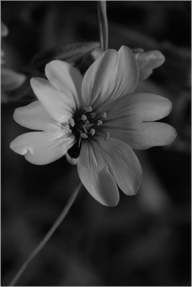 Blüte SW