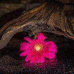 Blüte unter einer Wurzel