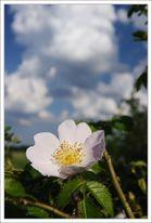 Blüte & Wolken
