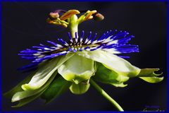 Blüte_1
