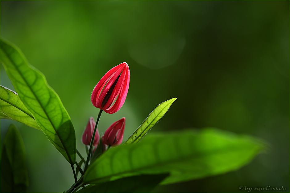 Blüteee