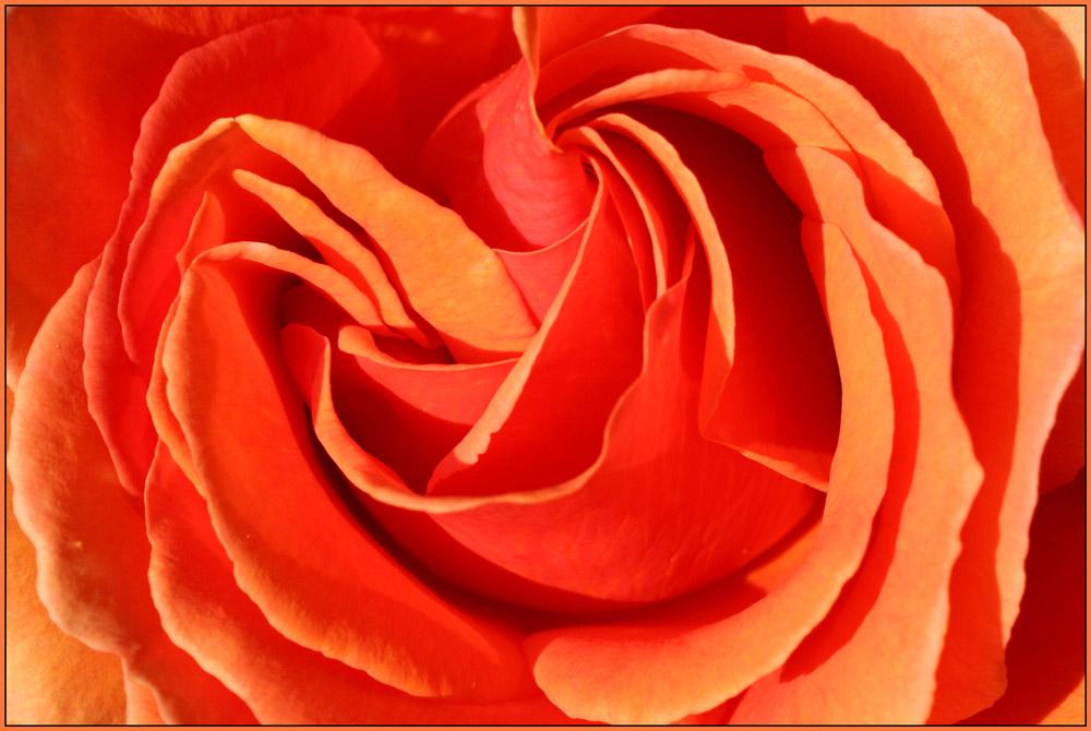 Blüten #01