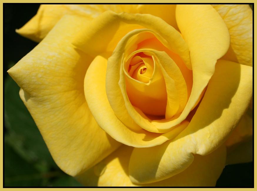 Blüten #02