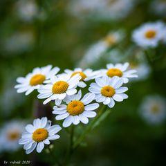 Blüten-104