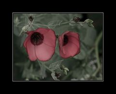 ... Blüten ...