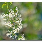 Blüten #2