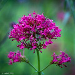 Blüten 2
