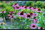 Blüten...