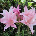 -- Blüten --