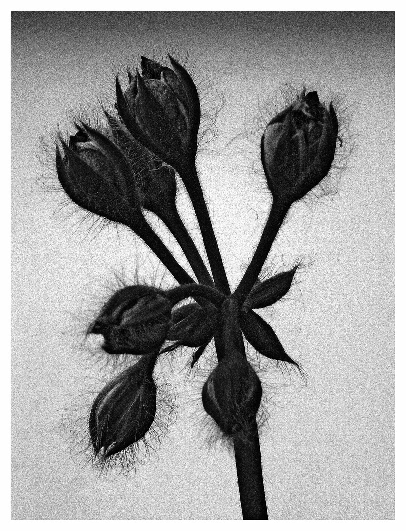 Blüten ..