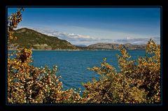 Blüten am Fjord