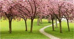 Blüten am Lebensweg