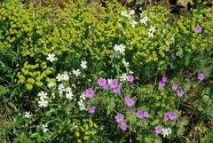 Blüten am Wegrand