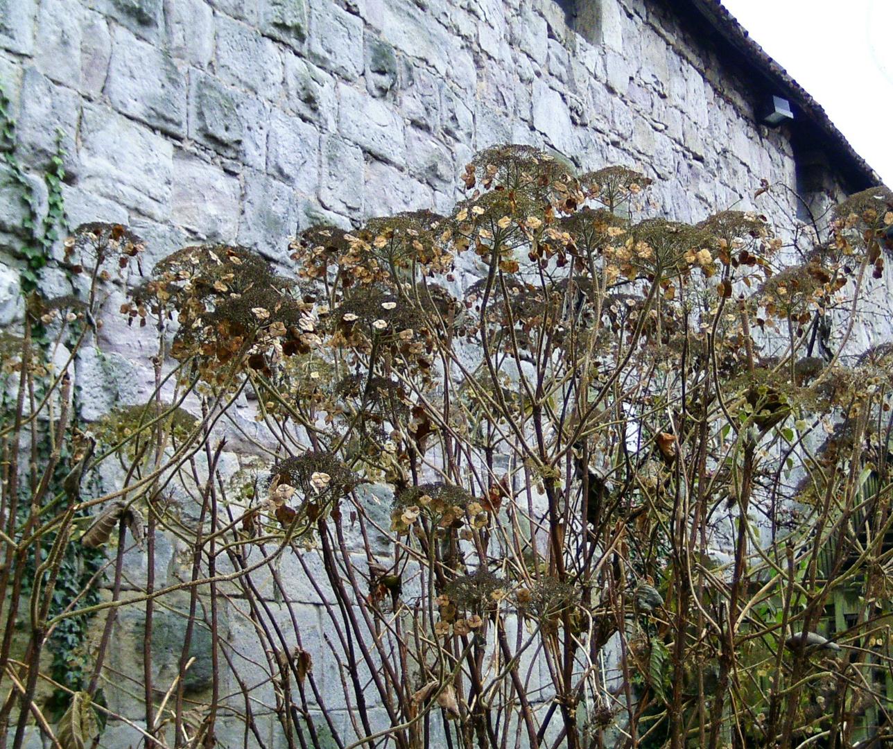 Blüten an der Mauer
