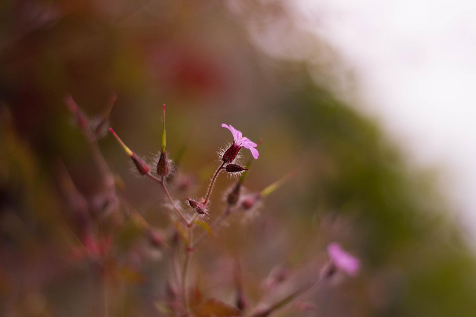Blüten an einer Burgmauer