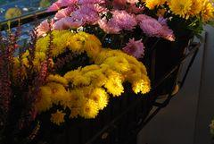 Blüten auf Balkonien