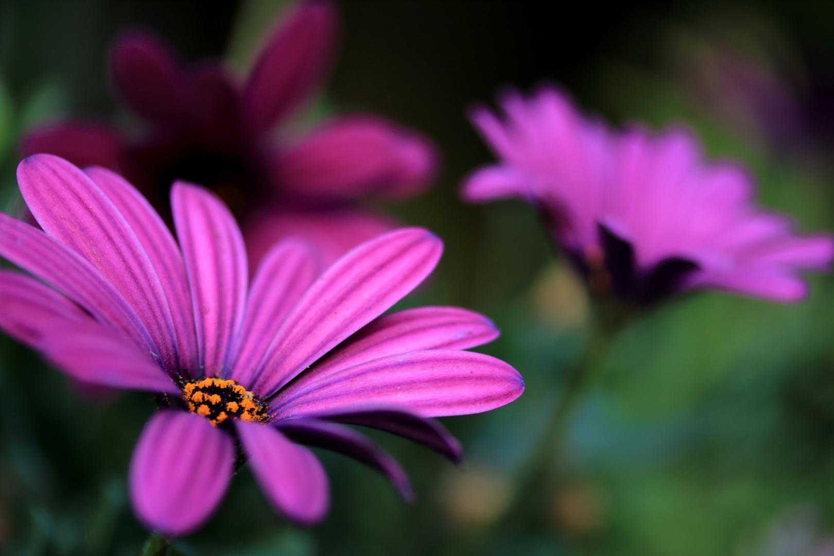 Blüten auf der Terasse