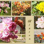 Blüten aus Sanssouci