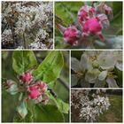 Blüten, Blüten, Blüten