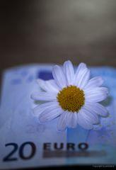 Blüten braucht das Land, aber NUR die echten!!!!  TAGESAKTUELL..#1533##