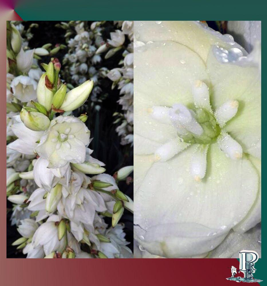 Blüten-Collage