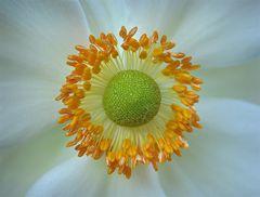...Blüten-Detail...