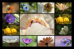 Blüten die ich mag