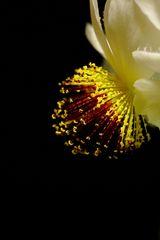 Blüten-Feuerwerk