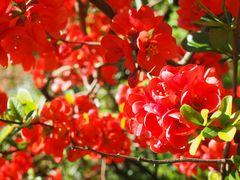 Blüten III