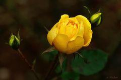 Blüten im Dezember 2