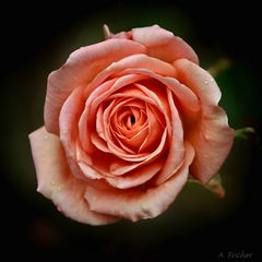 Blüten im Dezember 3