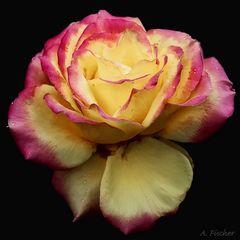Blüten im Dezember 6