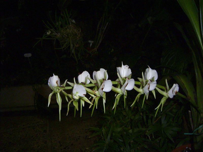 Blüten im Dunkeln