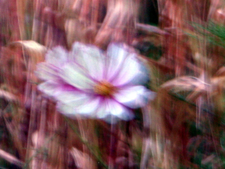 Blüten im Innenhof Depot/Abendlicht 1