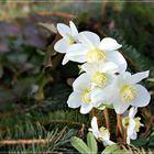Blüten im Januar