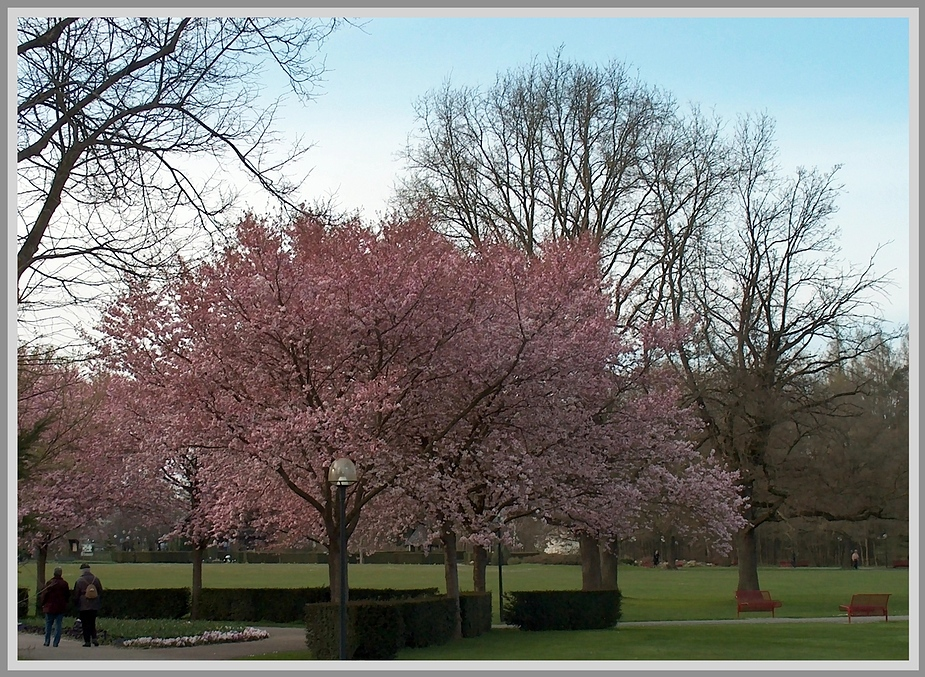 Blüten im Park