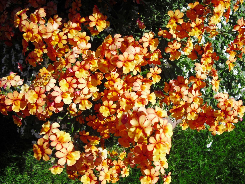 Blüten im Schatten und Licht