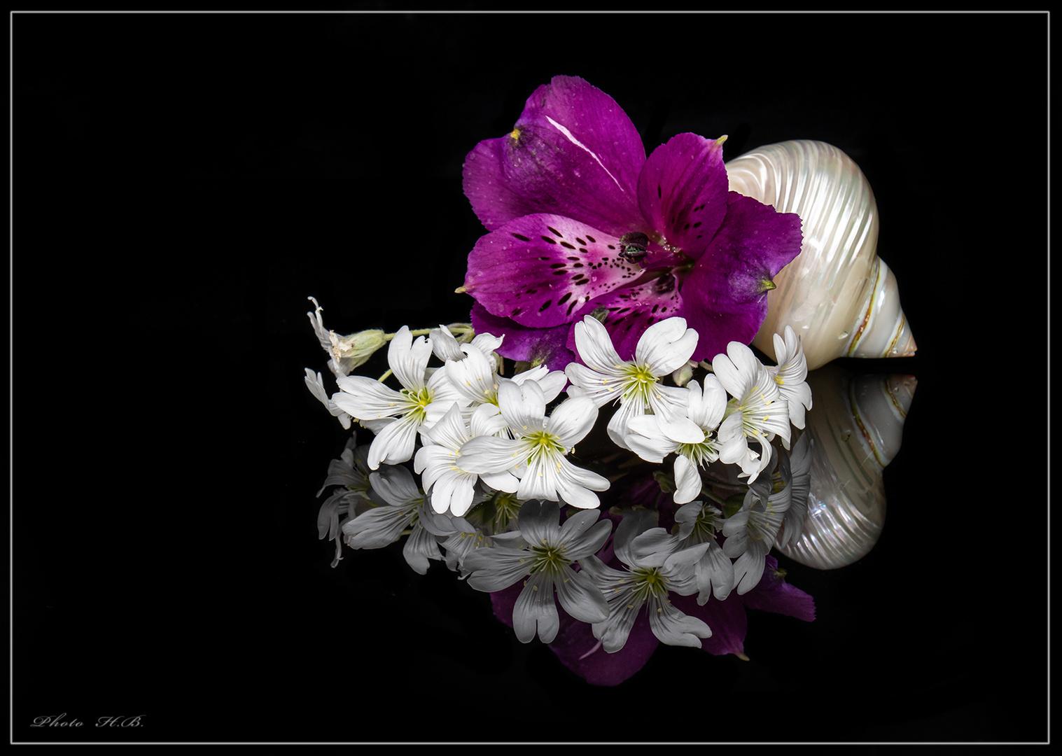 Blüten im schwarzen Spiegel