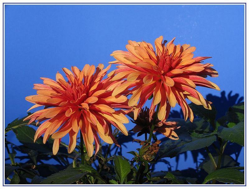 Blüten im Sonnenschein