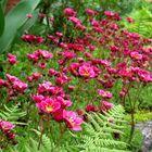 Blüten im Steingarten